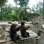 zoopark_kaliningrad
